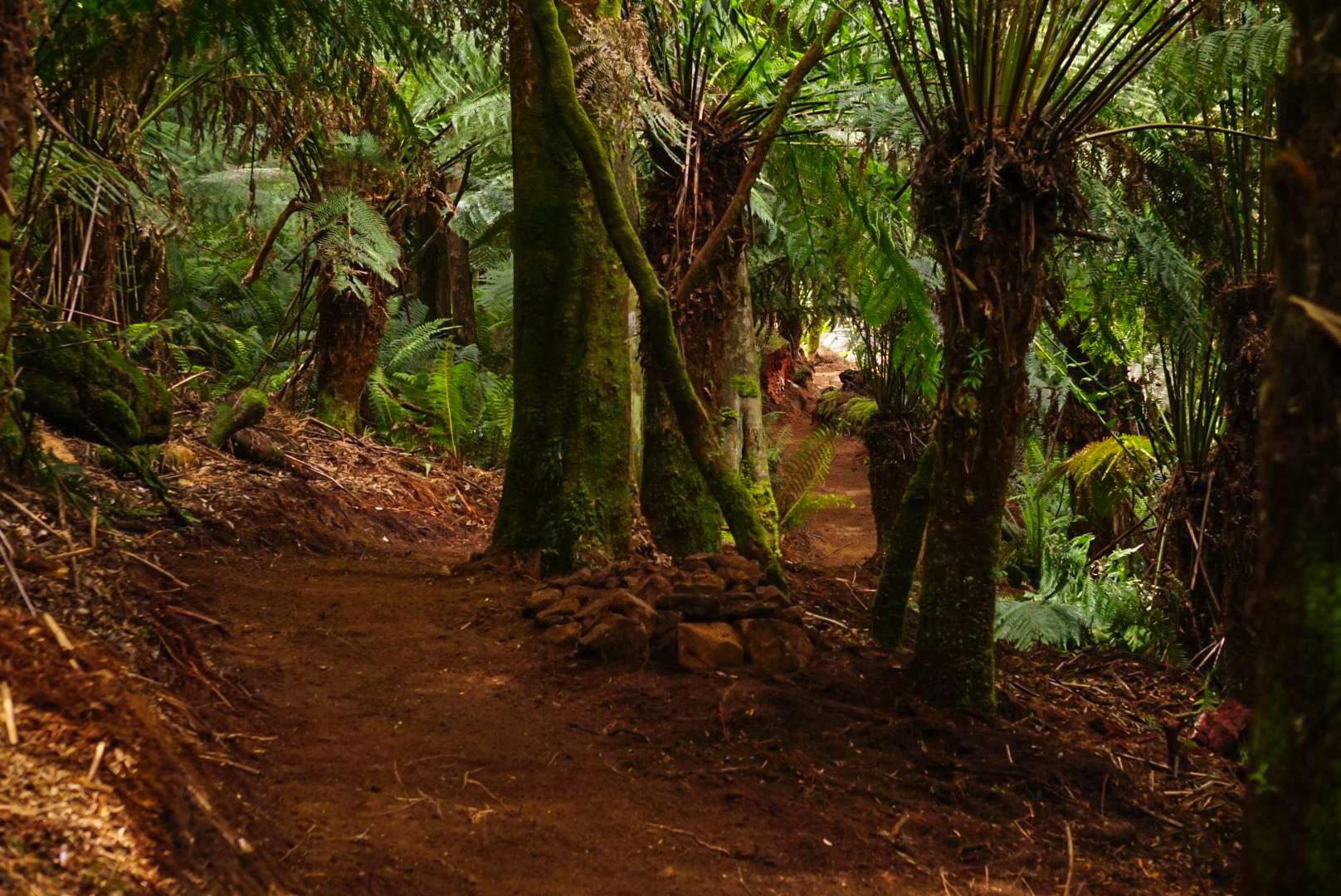 La magnifique Krushka's Trail de Blue Derby.